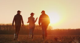 3 farmers walking toward some trees at sunset