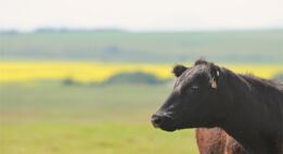 Farmers: Do You Have an Ag Marketing Strategy?